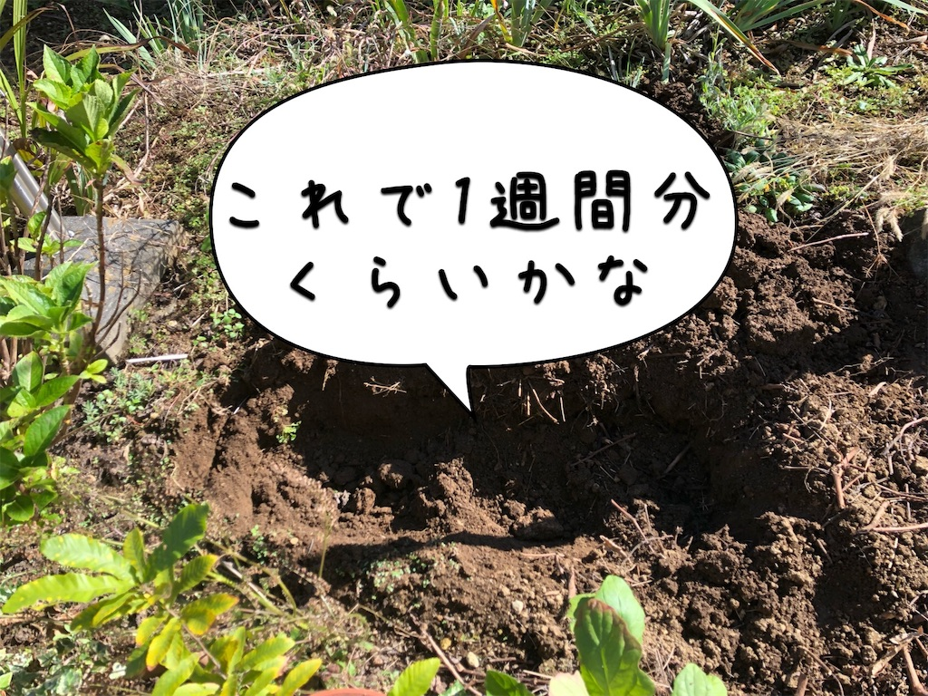 f:id:saho-tamura:20191104133903j:image