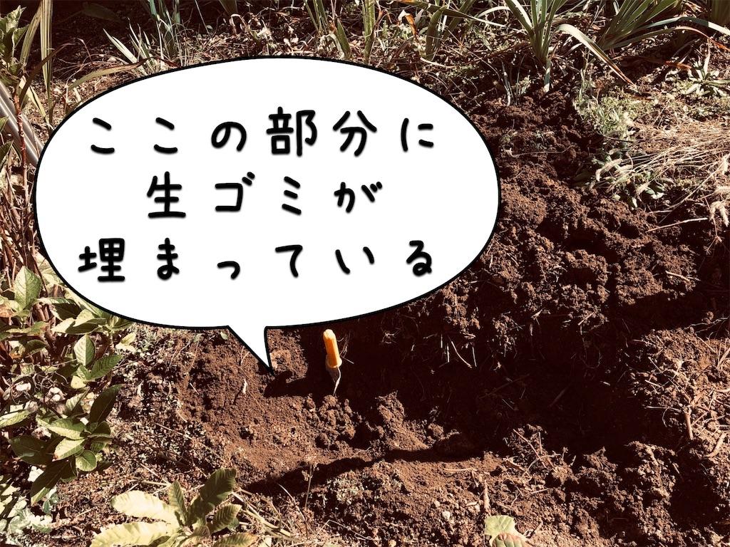f:id:saho-tamura:20191104134807j:image