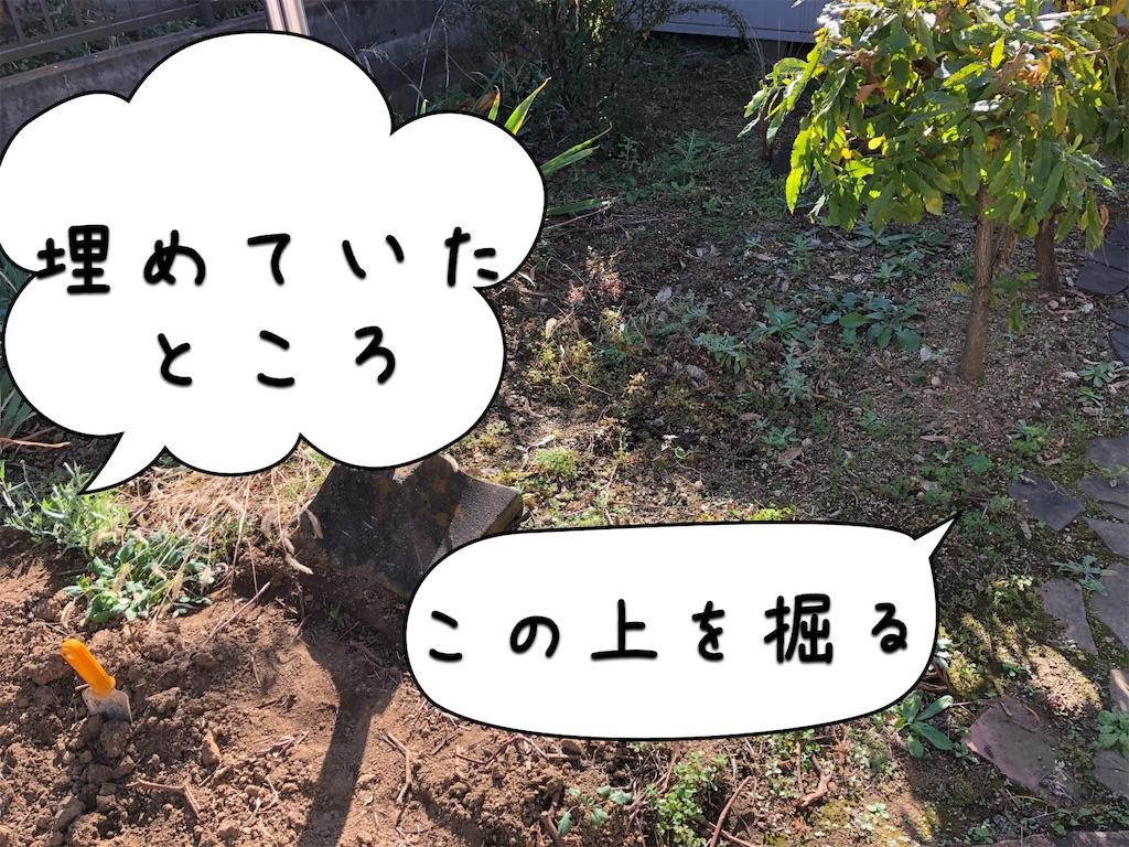 f:id:saho-tamura:20191117130323j:image