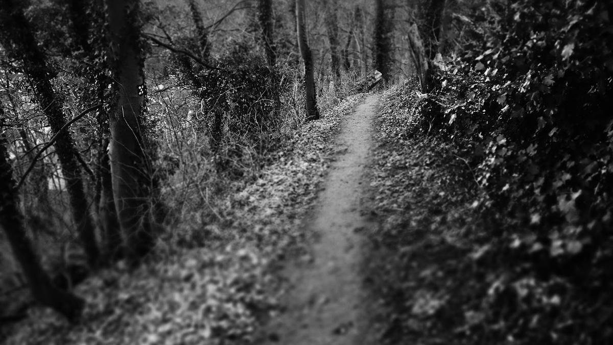 闇夜の林道
