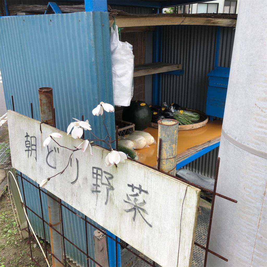 f:id:saho-tamura:20200731140333j:image