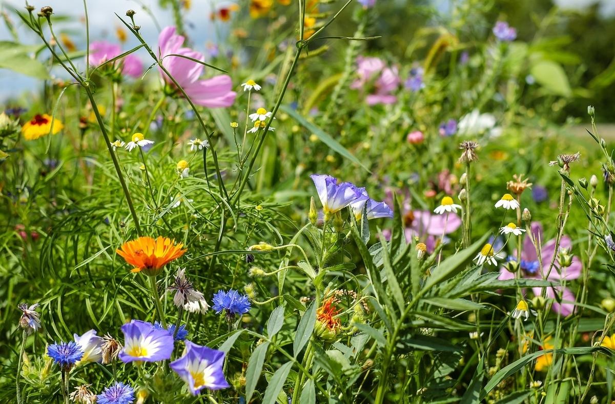 たくましい野の草花