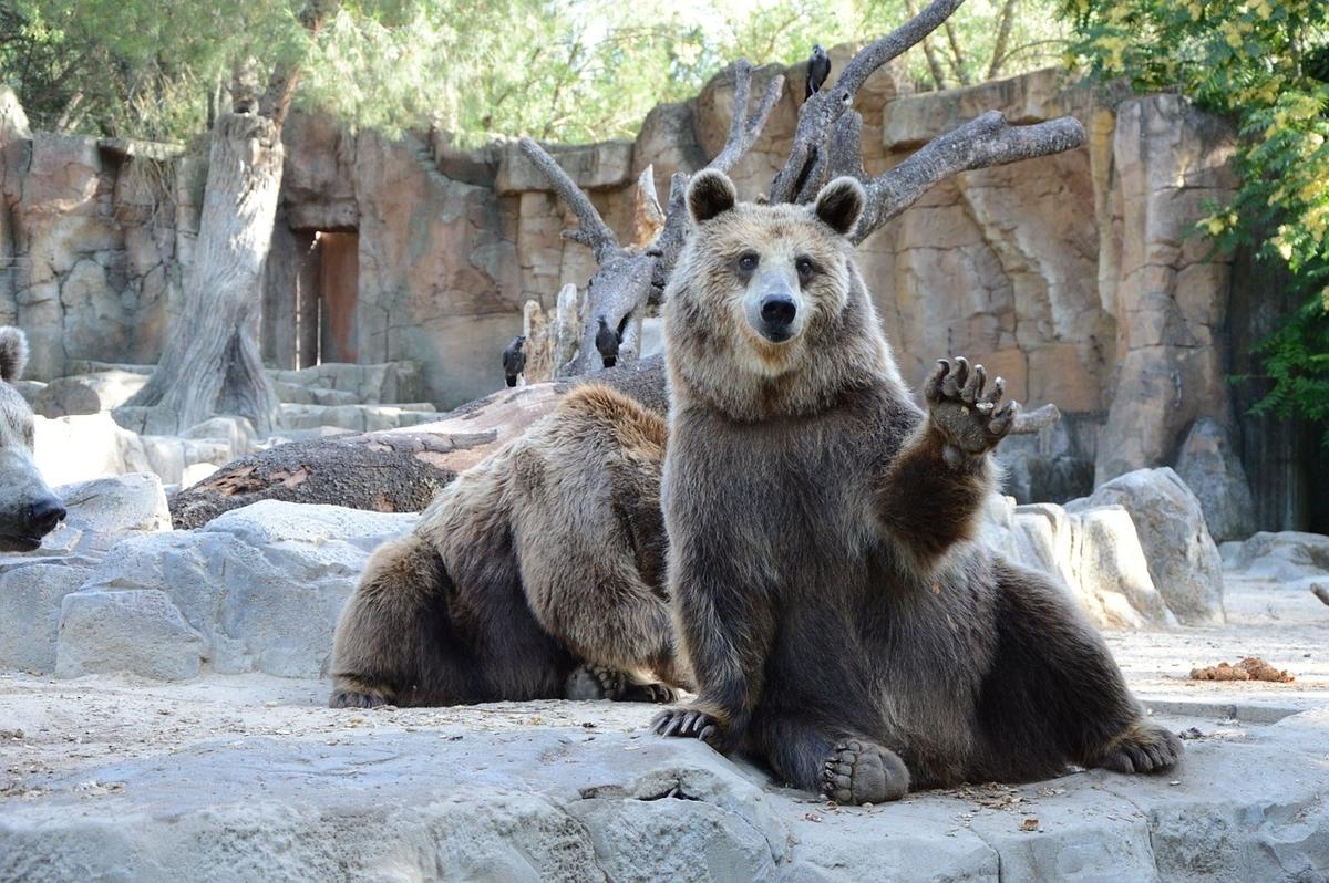 ハーイ!と手を上げてあいさつする熊