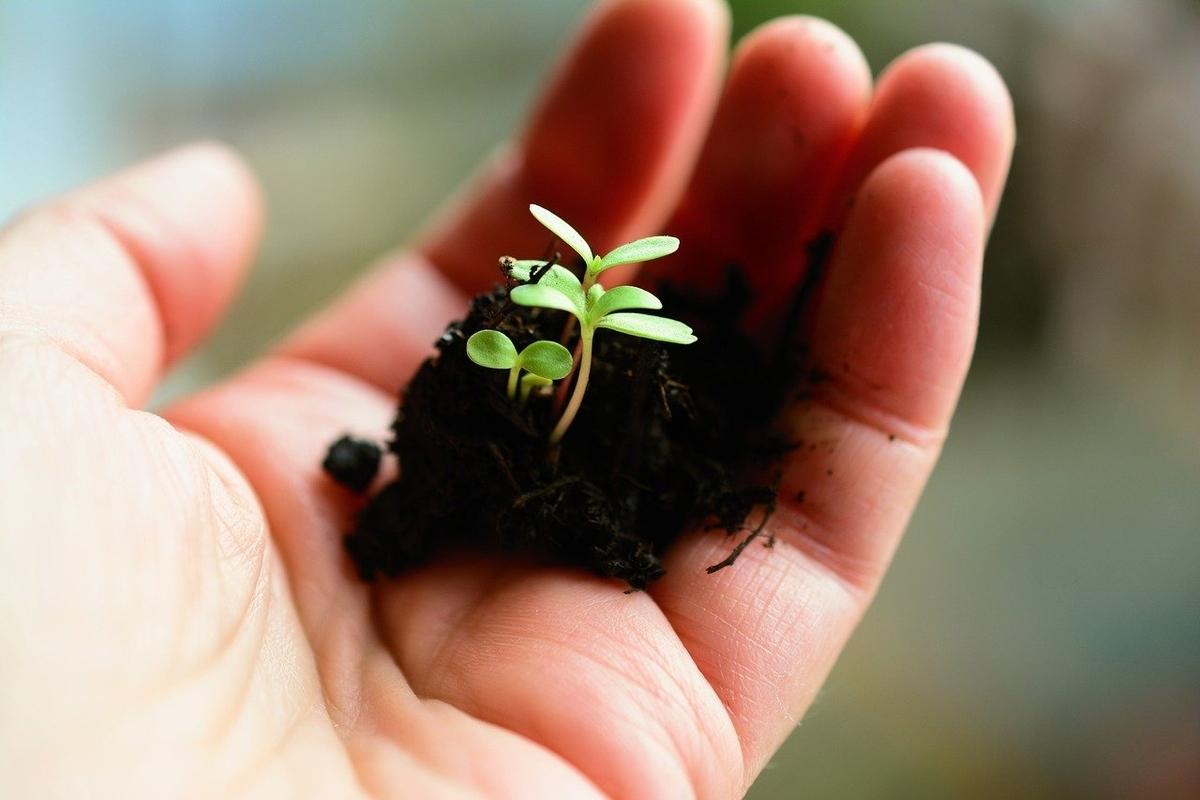 成長する草の芽