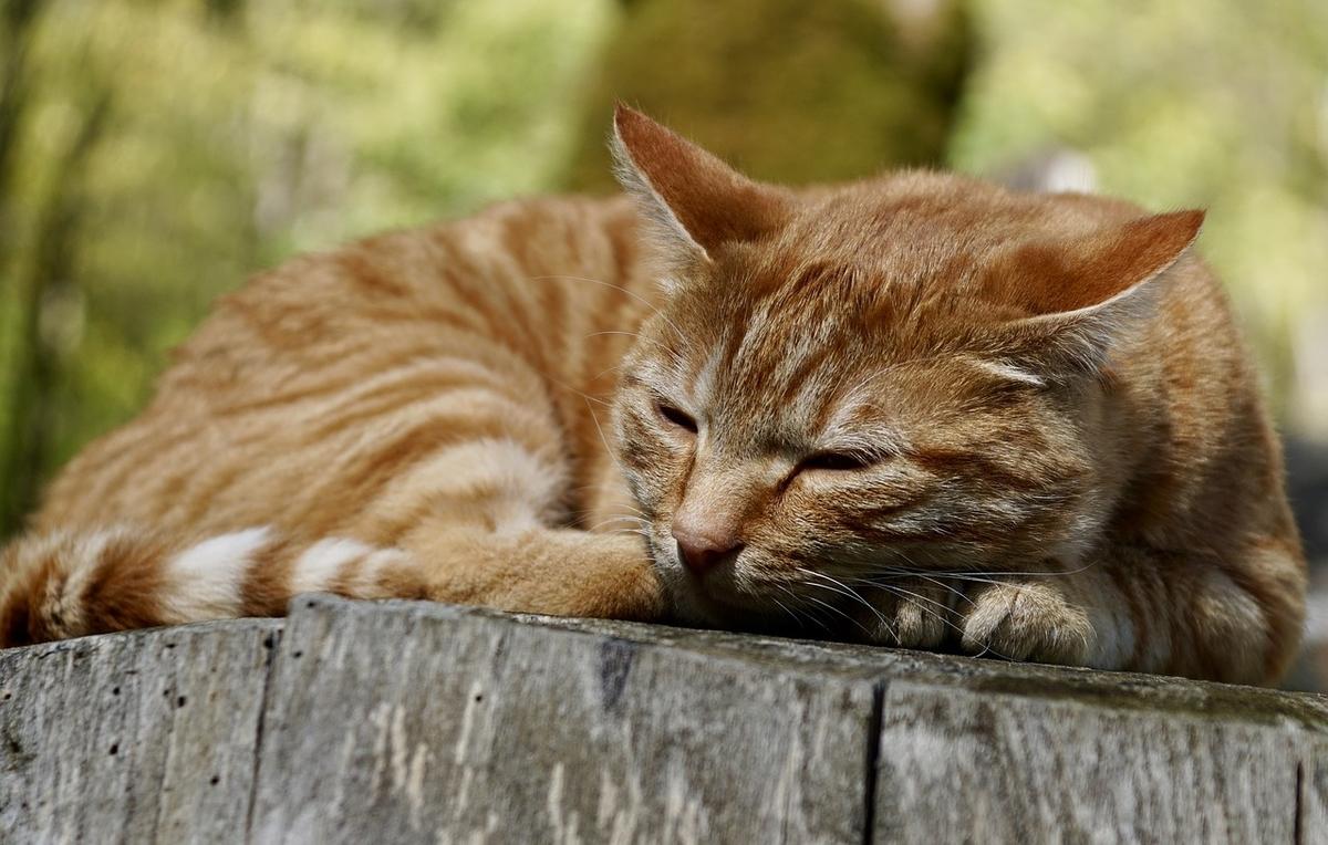 疲れたように目をほそくしているネコ