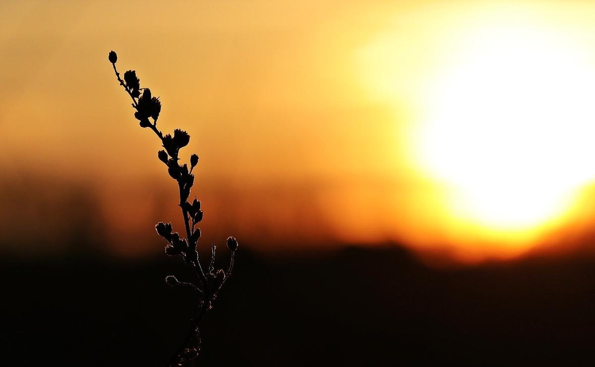 夕日に照らされる木のシルエット