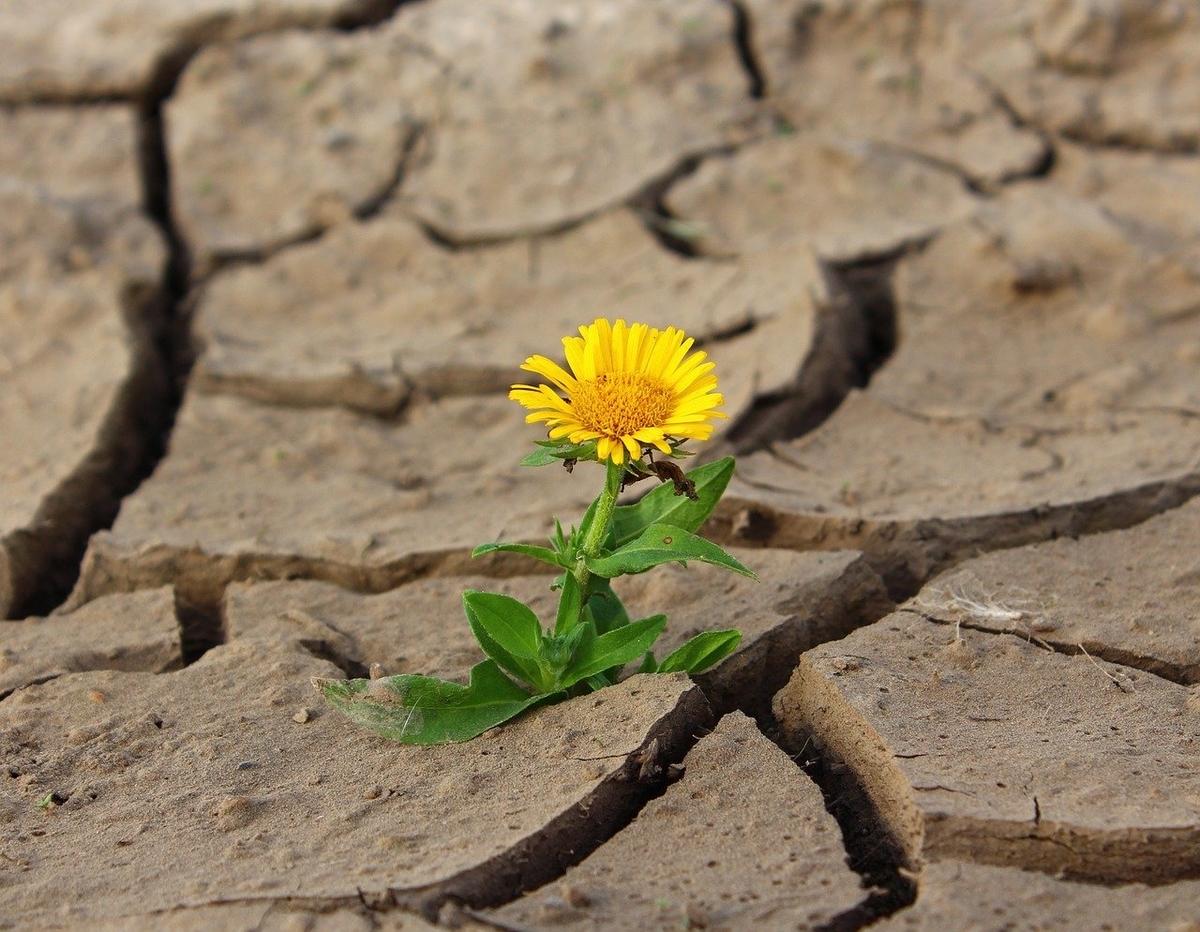 奇跡的に干ばつの中咲いた花