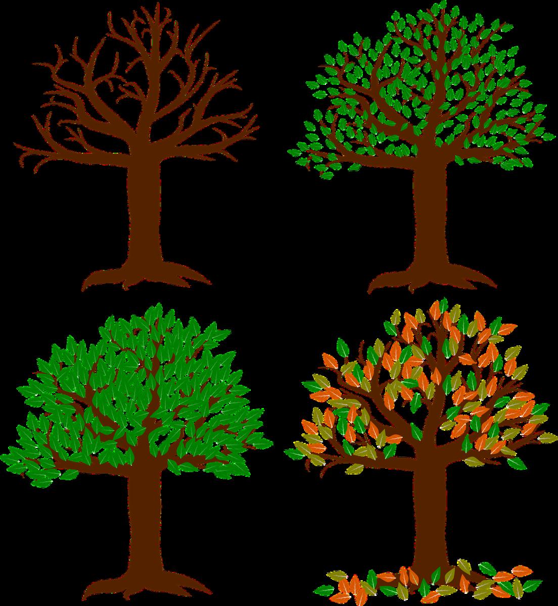 四季によって変化する広葉樹の絵