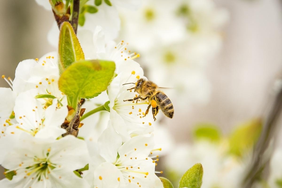 働き蜂のようにびしばし働こう!
