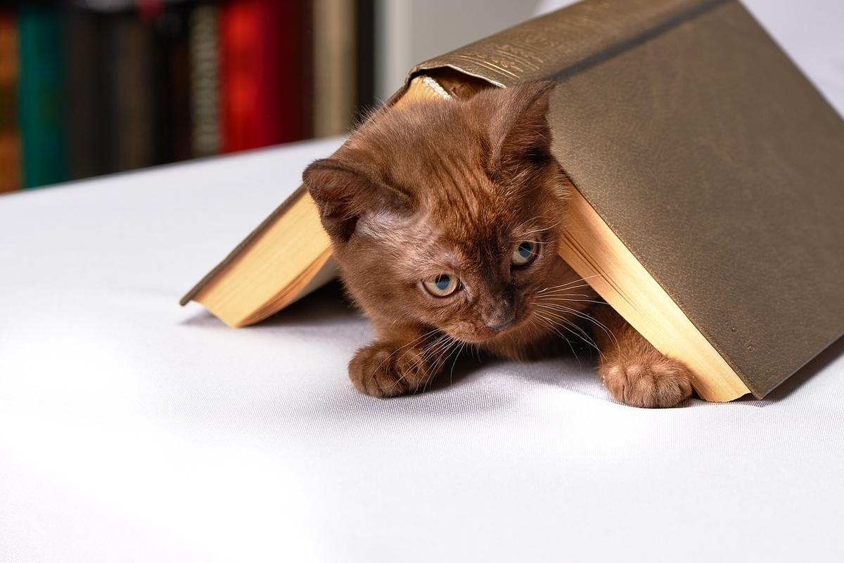 伏せた本の下に潜るネコ