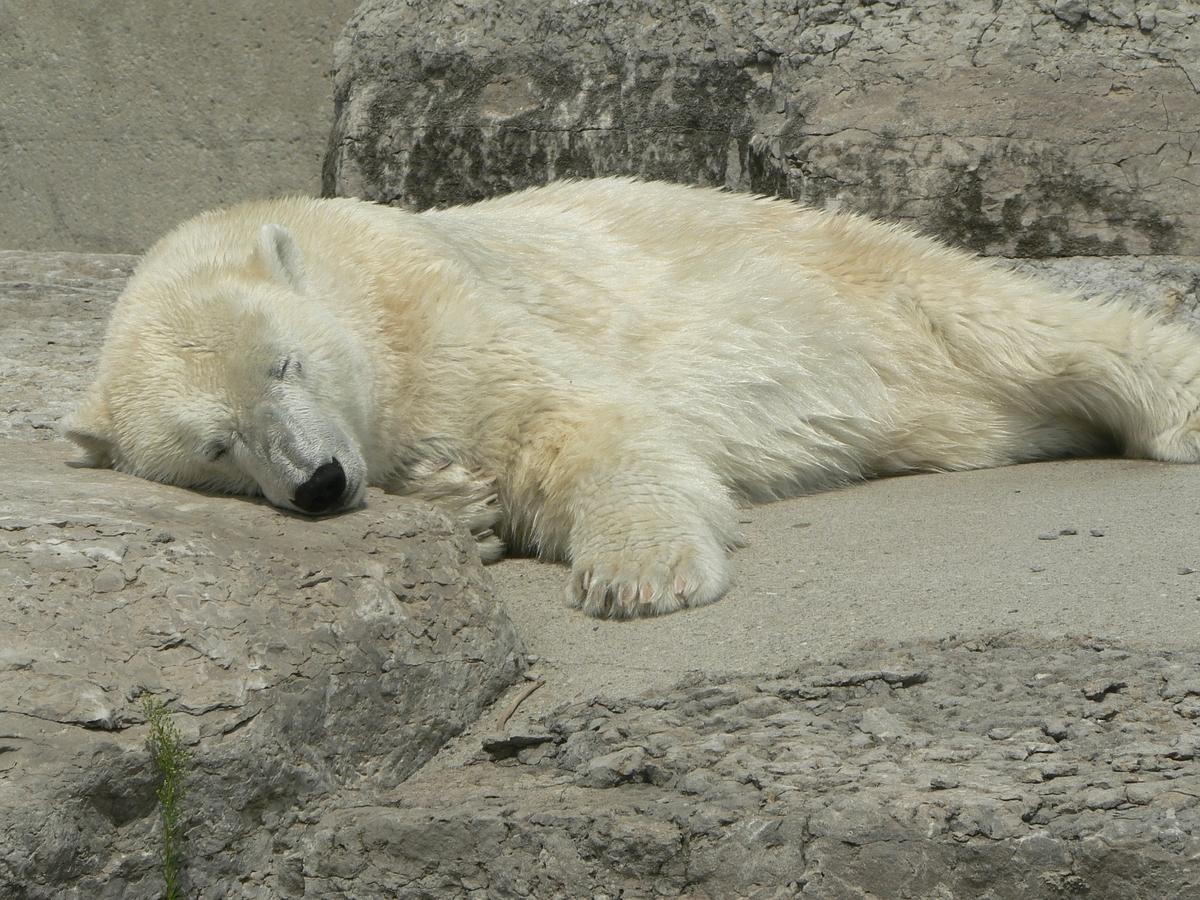 ぐっすり眠って起きられない昼寝