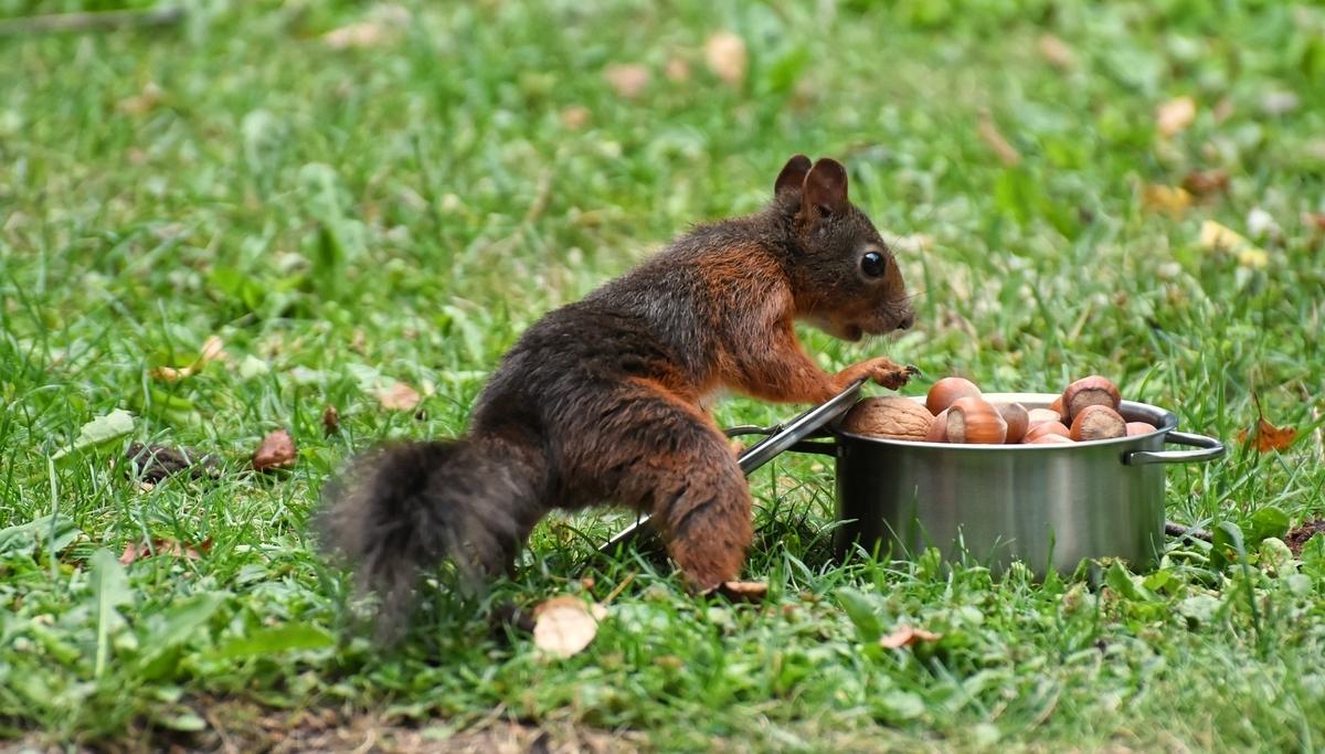 つい食べたくなるナッツ