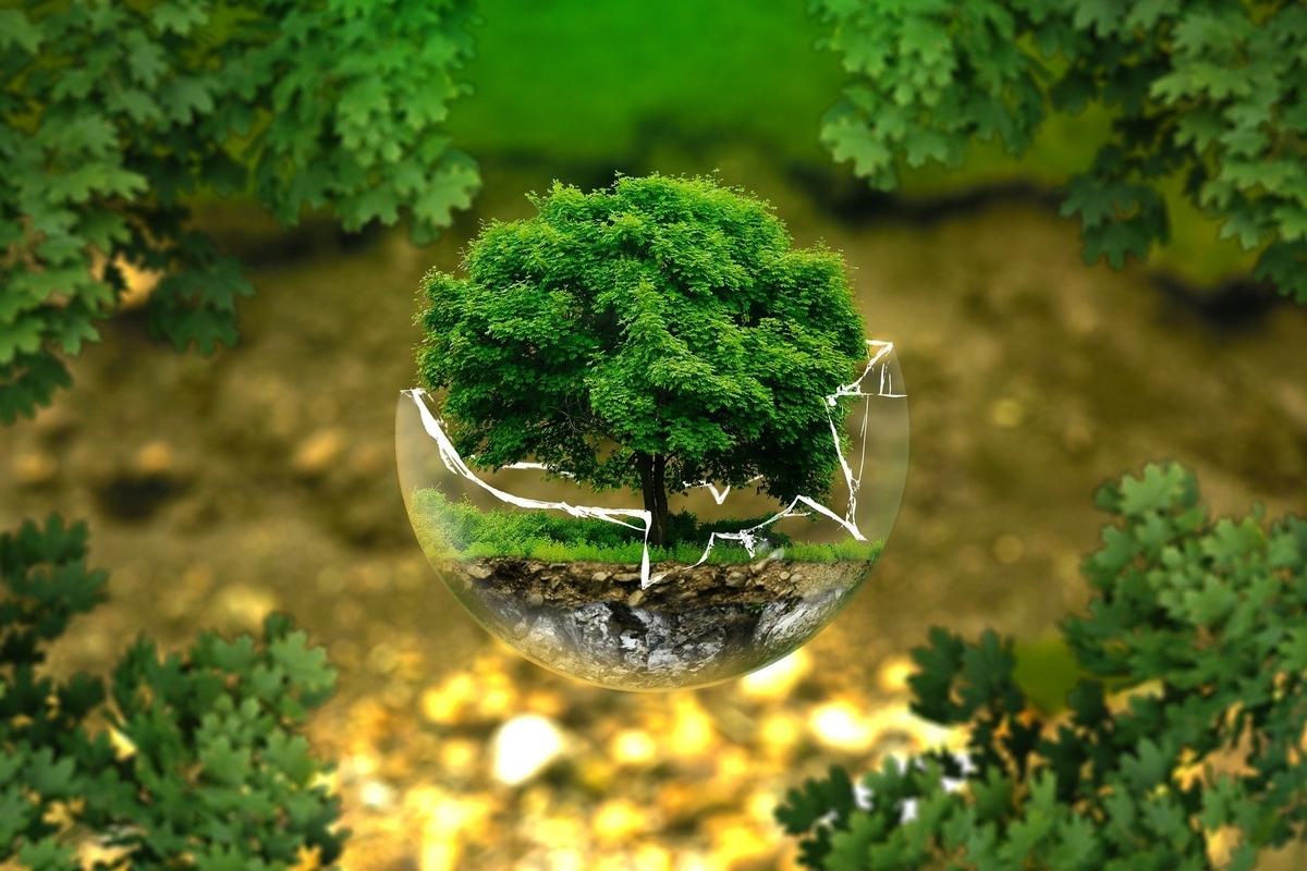 ガラスに守られた危なっかしい緑の木