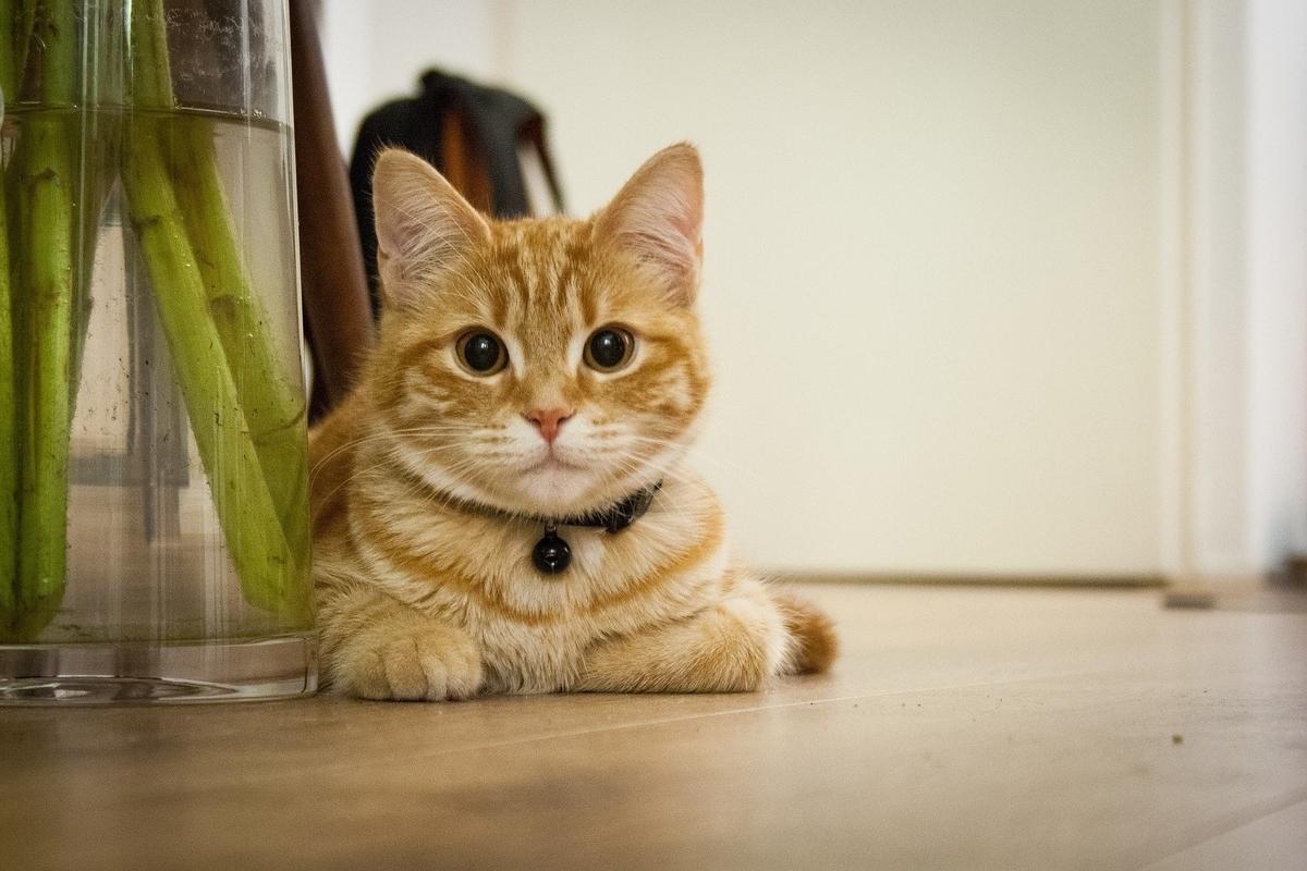 じっと見ているネコ