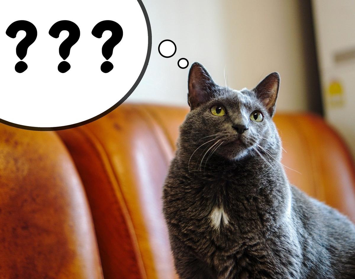 疑問を持っているネコ