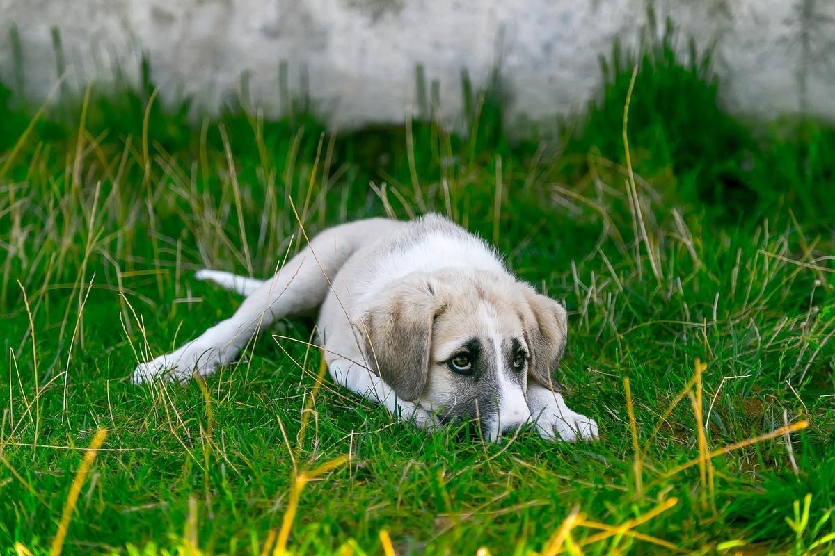 ぼくは関係ないよと上目遣いで見ている小犬