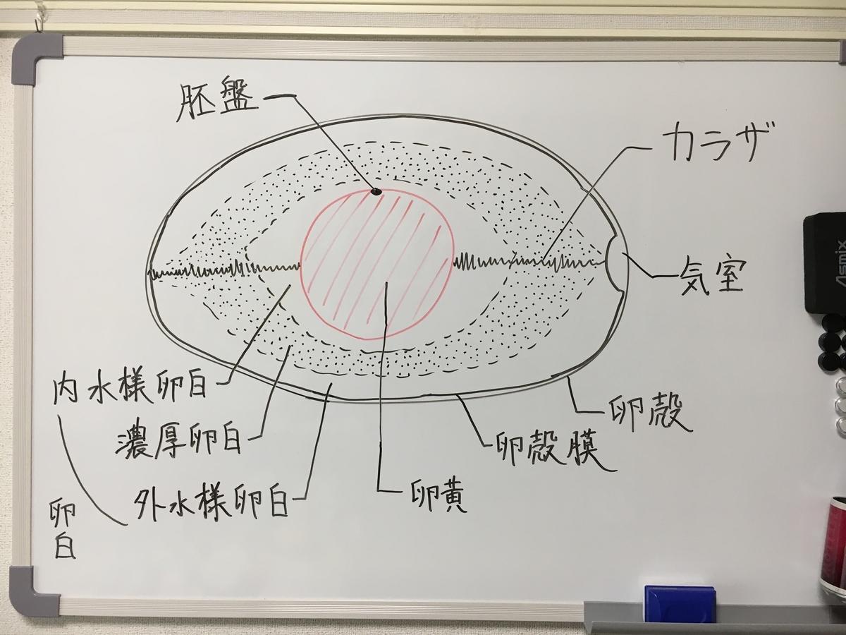 f:id:saijo-san:20210620183813j:plain