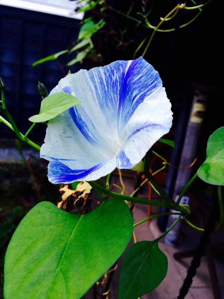 f:id:saikatsu:20151027191608j:plain