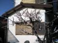隣家の越境侵害が梅や桜の木なら