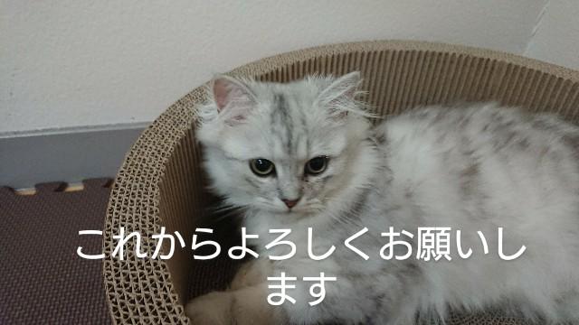f:id:saikootoko:20200313022628j:image