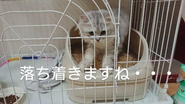f:id:saikootoko:20200313023825j:image