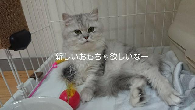 f:id:saikootoko:20200316203642j:image