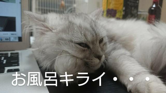 f:id:saikootoko:20200318194055j:image