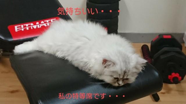 f:id:saikootoko:20200827195718j:image