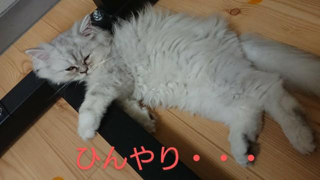 f:id:saikootoko:20200827195737j:image