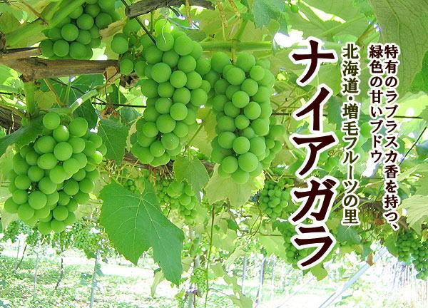 f:id:saikootoko:20210228233624j:plain