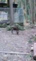 デッサンしてたら野生の鹿が出てきた。可愛いなお前