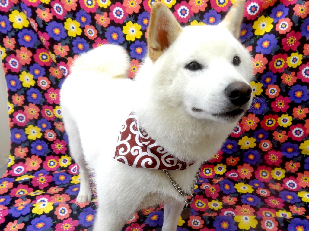 f:id:sainomori-ah:20161102152751j:plain