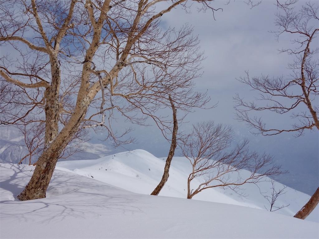 f:id:sainomori:20190412210702j:image