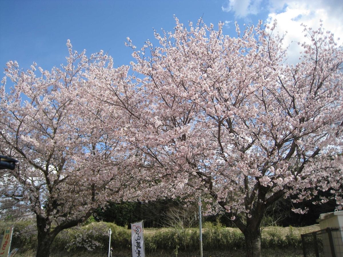 f:id:saisakura:20190409212338j:plain