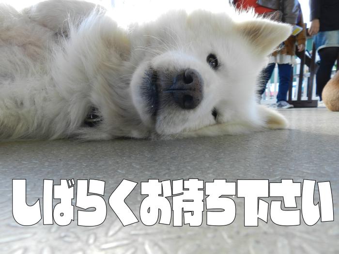 f:id:saitama-nekoyashiki:20190316222348p:plain