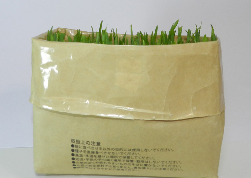 f:id:saitama-nekoyashiki:20190330084103j:plain