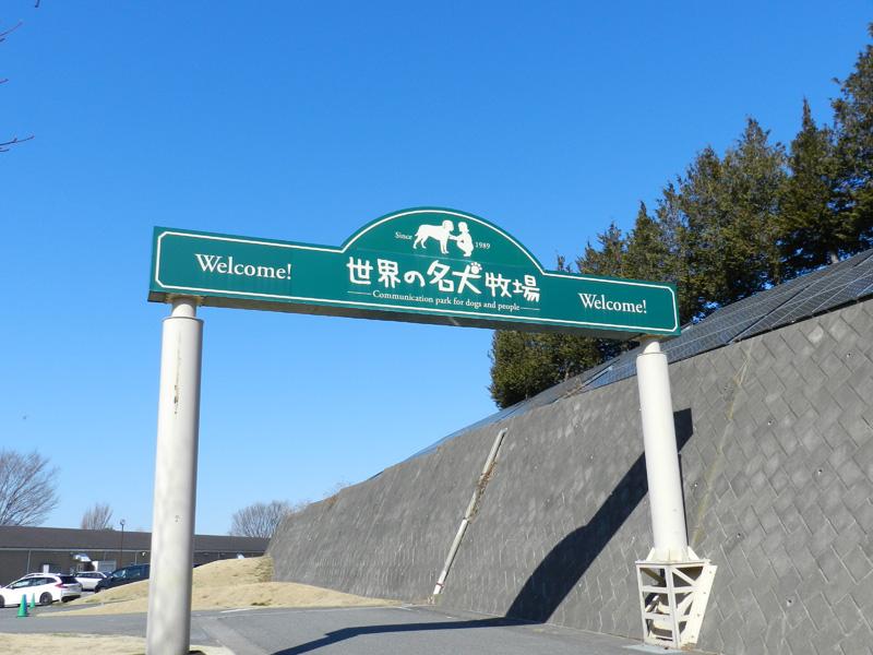 f:id:saitama-nekoyashiki:20190330143843j:plain