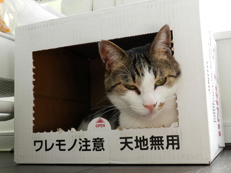 f:id:saitama-nekoyashiki:20190407123525j:plain