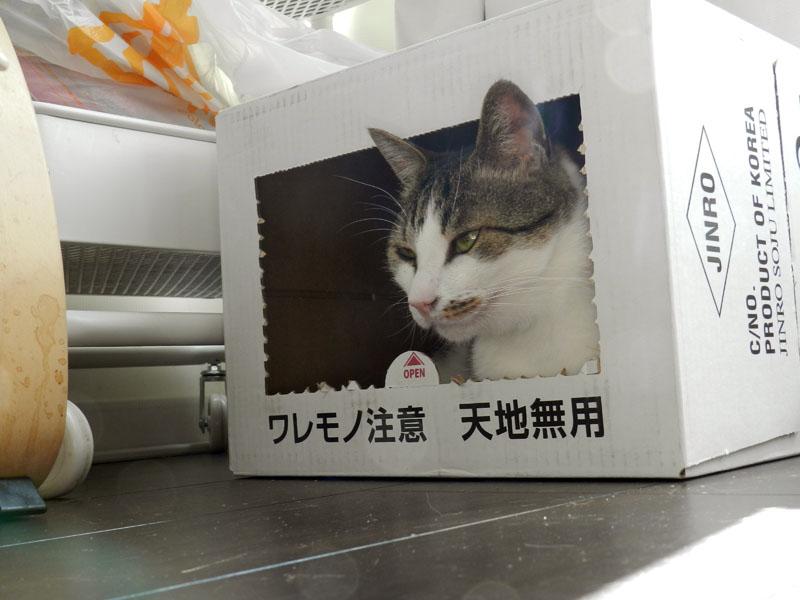 f:id:saitama-nekoyashiki:20190407123551j:plain