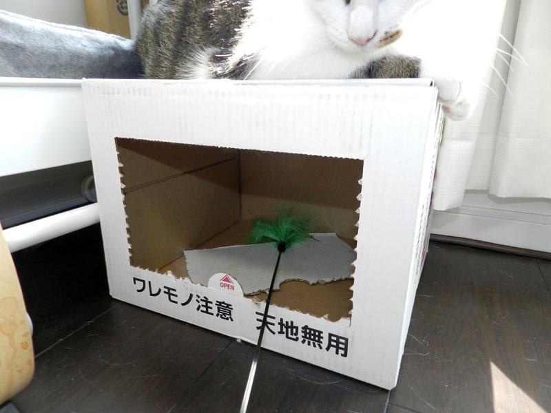 f:id:saitama-nekoyashiki:20190407123844j:plain
