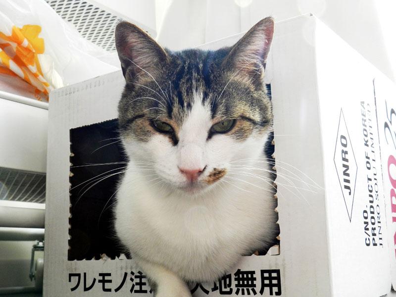 f:id:saitama-nekoyashiki:20190407124523j:plain