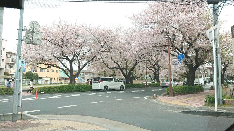 f:id:saitama-nekoyashiki:20190420163510j:plain