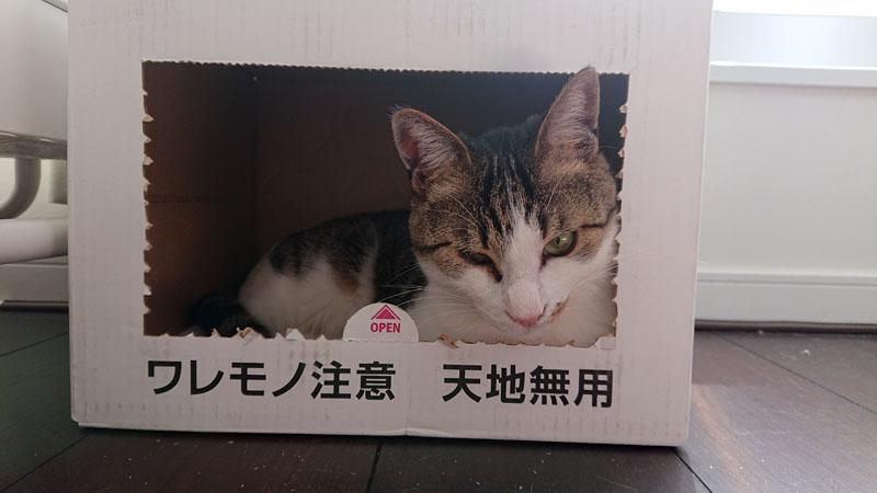 f:id:saitama-nekoyashiki:20190420173442j:plain