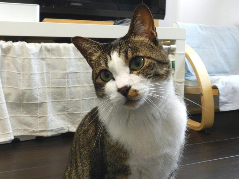 f:id:saitama-nekoyashiki:20190615164616j:plain