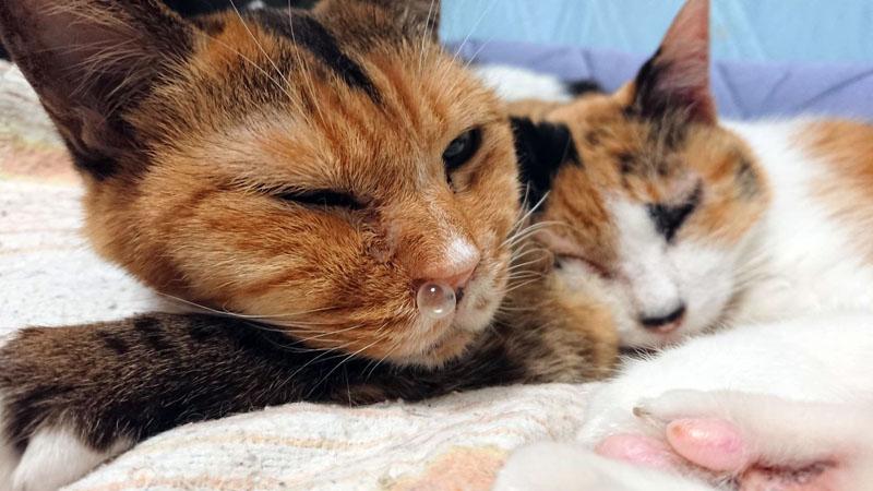鼻ちょうちんと猫