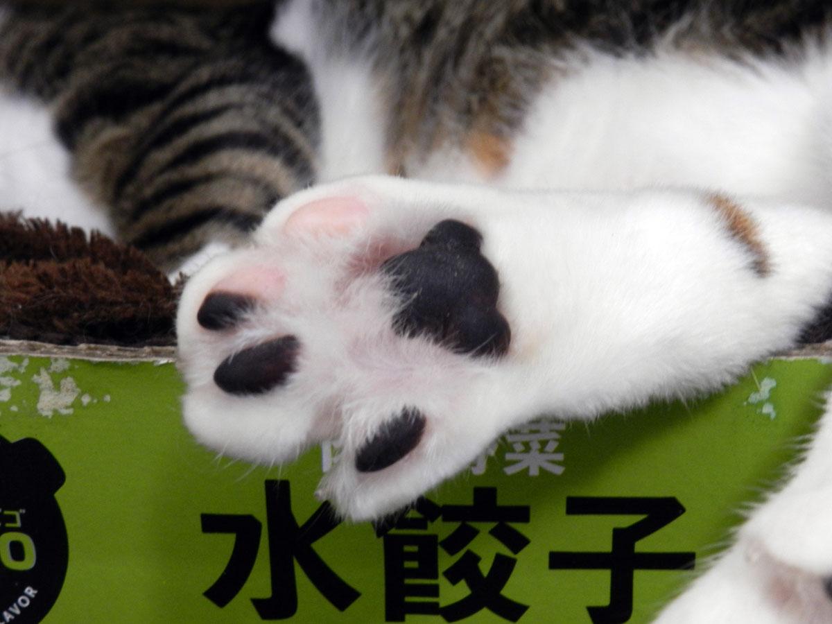 f:id:saitama-nekoyashiki:20200712060228j:plain