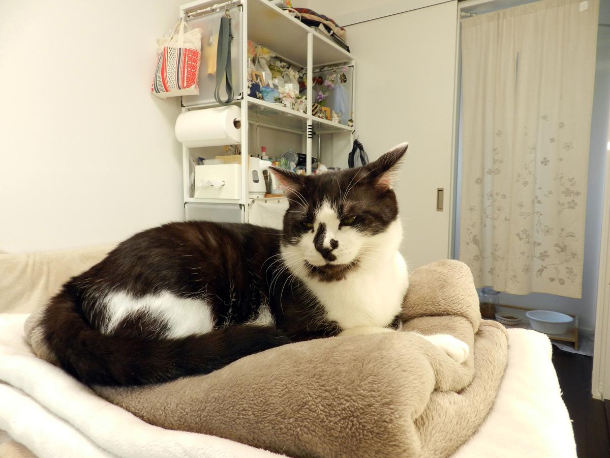f:id:saitama-nekoyashiki:20210103083345j:plain