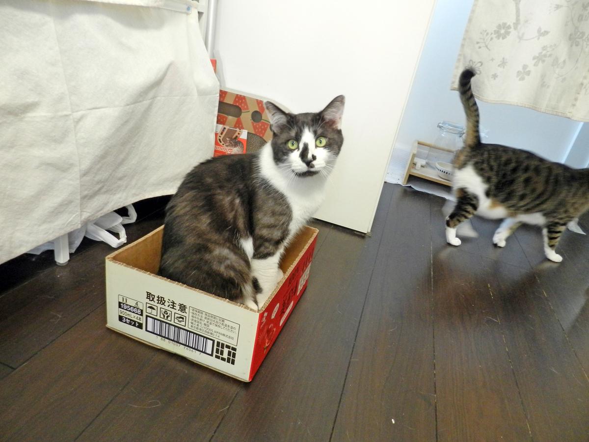 f:id:saitama-nekoyashiki:20210425081502j:plain