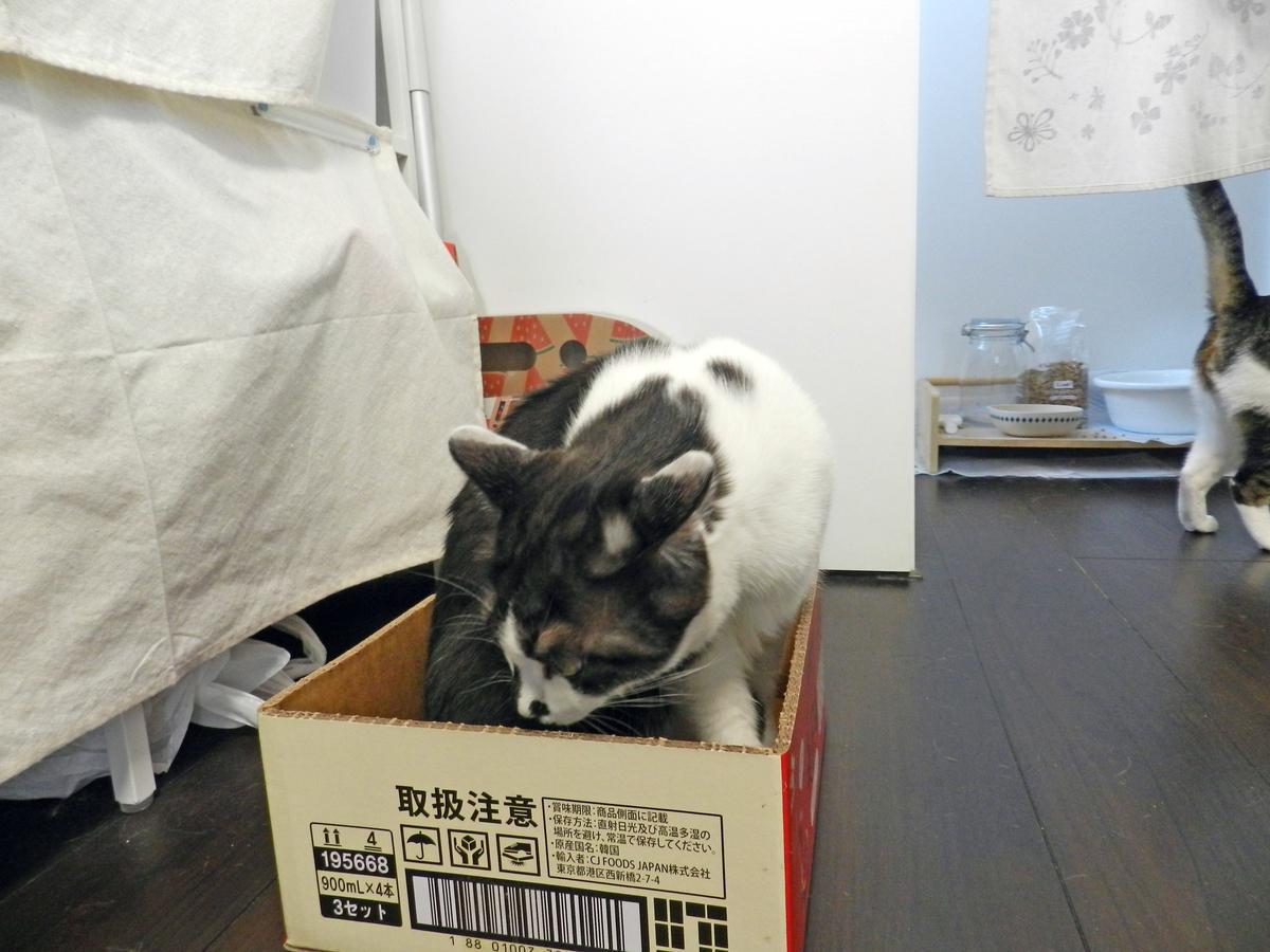 f:id:saitama-nekoyashiki:20210425082157j:plain