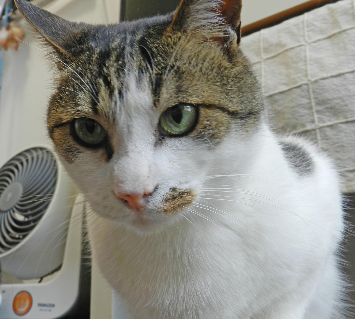 f:id:saitama-nekoyashiki:20210516091157j:plain